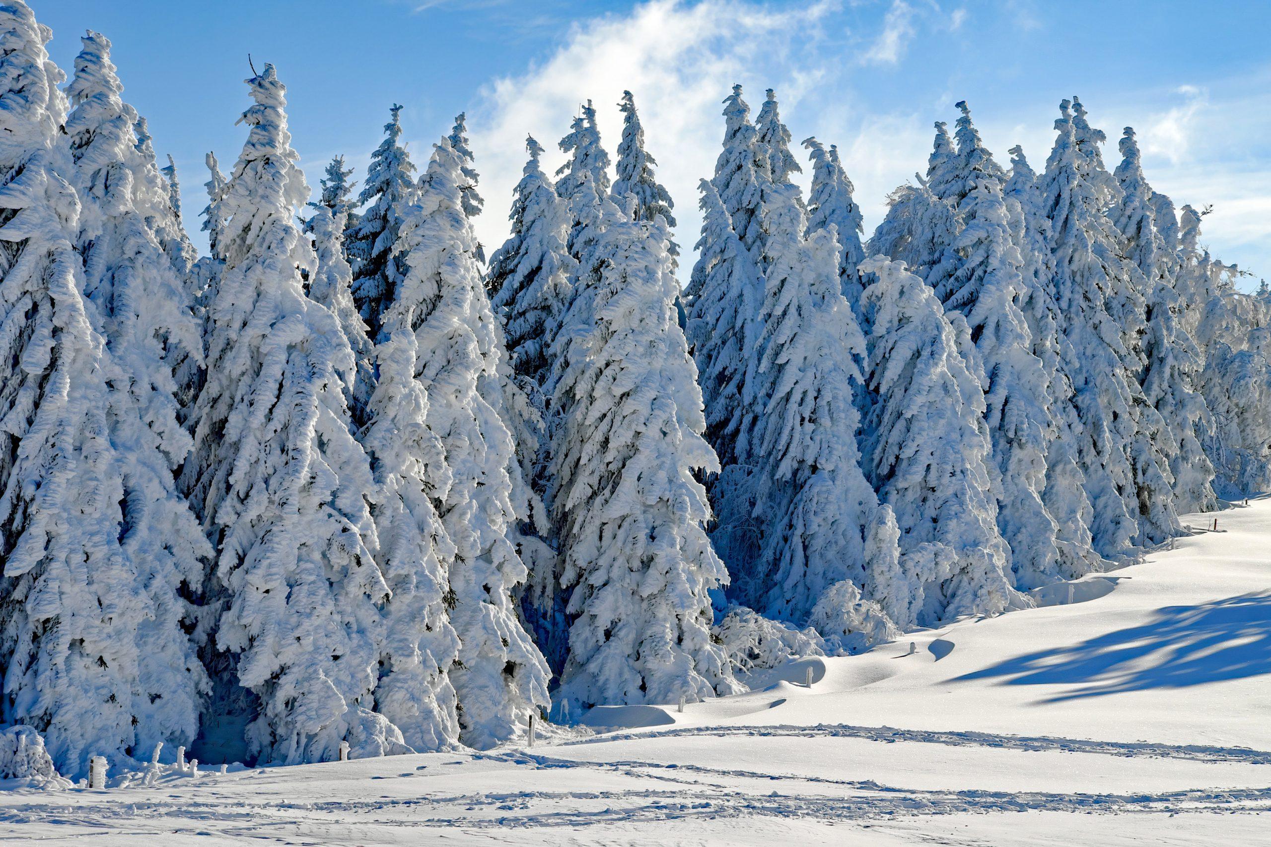 Grandvalira Resorts inaugura este sábado la temporada de invierno 2019-2020 con la apertura de la estación de Ordino Arcalís. Las nevadas de estos últimos días han dejado unas cotas en la estación de Ordino que oscilan entre los 20 y 40 cm de nieve polvo.